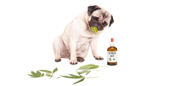CBD Dosage Chart For Dogs