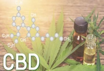 CBD Oil Safe