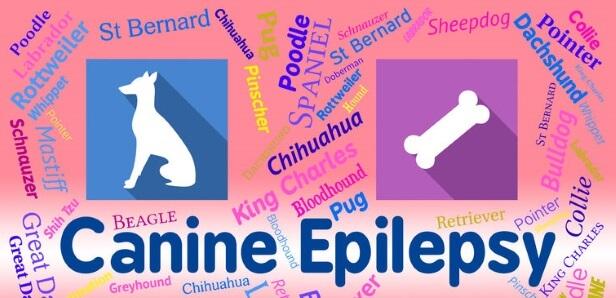 dog Epilepsy treatment with cbd oil