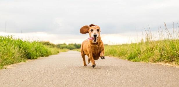 dog Parkinson treatment with cbd oil