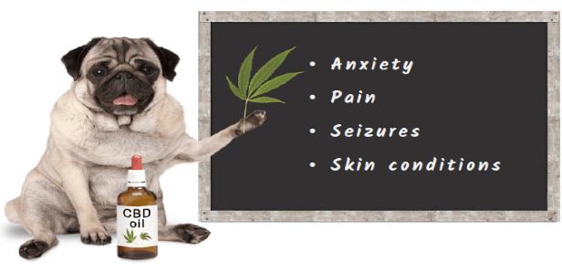 Does my pet really need CBD oil