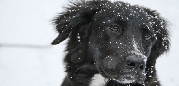 Keep Your Furry Friends Healthy in the Winter