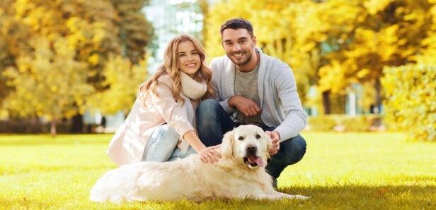 5 Tips to Prevent Seizures in Your Labrador and Golden Retriever