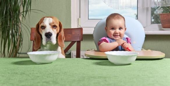 CBD Oil For Dogs' Appetite