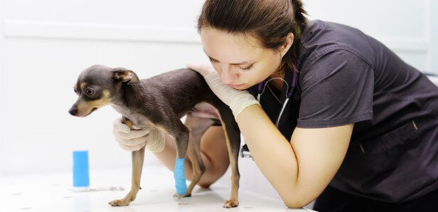 Glucosamine Sulfate for Dogs