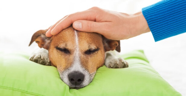 CBD Oil For Dog Nausea