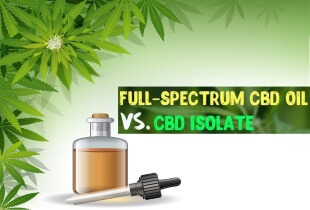 Should I Give My Dog Full-Spectrum CBD Oil Or CBD Isolate?