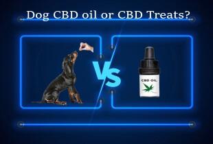 CBD oil or CBD treats
