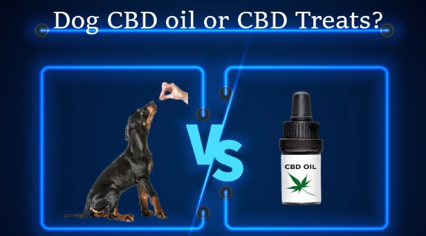 CBD oil or CBD treats