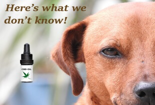 Heres-what-we-dont-yet-know-about-CBD-oil-for-dogs1