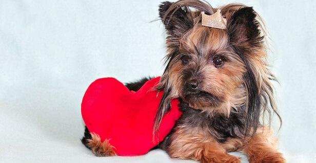 CBD for Dogs Heart Disease